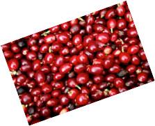 קפה kona red